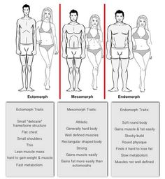 Body Types & Composition