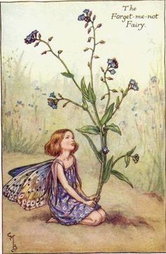 """""""Forget-Me-Not Fairy"""" ... a Summer Fairy ... by Cicely Mary Barker"""