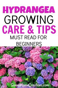 Hydrangea Care and Growing Tips Here are some awesome tips and ideas for growing hydrangeas in your backyard. These flowers have beautiful blooms. The blooms can be pink, blue or purple and these shrubs are perfect for your landscape in your front, side Hydrangea Landscaping, Front Yard Landscaping, Backyard Landscaping, Landscaping Ideas, Landscaping With Flowers, Florida Landscaping, Sloped Backyard, Backyard Farming, Modern Landscaping
