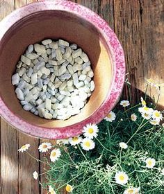 Styrofoam Peanuts as Potting Mix | Secret substitutions to help with planting, watering, and more.