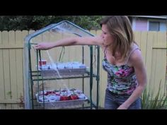 Starting Seeds Indoor with Kim Part 3 of 5-  how to transplant the seeds from the indoor Jiffy greenhouse into plastic cups in trays into a small portable greenhouse.