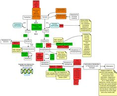here are select methylation diagrams dr amy references in rh pinterest com