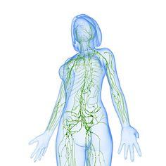 Застой лимфы приводит к многим хроническим болезням и недомоганиям. Вот как его предотвратить!