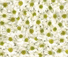 Daisies. Bring the feel of the outdoors into your home with this funky floral flooring. The neutral tones of this daisy floor are perfect in a playroom, hallway or conservatory.