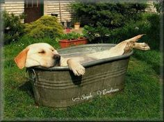 The Labrador Site - Yellow Lab Relaxing in the Tub Cute Puppies, Cute Dogs, Dogs And Puppies, Funny Dogs, Funny Animals, Cute Animals, Tier Fotos, Doge, Mans Best Friend