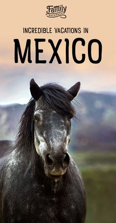 Incredible Vacations in #Mexico- If you are looking for an incredible, but #cheap #destination to book for your next vacation, you may want to consider #Mexico.  People all over the world, travel to Mexico to experience #fun, #adventure, culture and more.  Check out the Family Backpack's #tips on #activities in Mexico, #packing for Mexico, and more. Find out why more and more people are booking incredible, #bucketlist -worthy vacations, in Mexico!