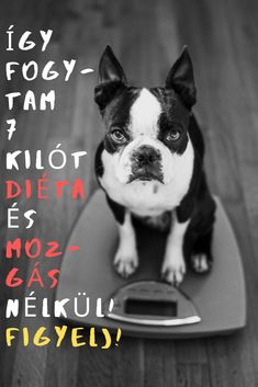 Boston Terrier, Fitness, Diet, Boston Terriers, Keep Fit, Rogue Fitness