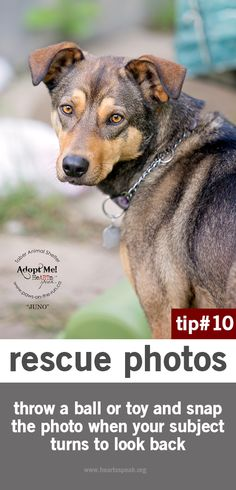 Rescue photography tip #10 - be ready with that ball!