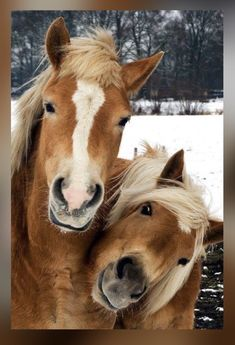 Pets Have Feelings Too shared Amazing Animals & Beautiful Nature's photo. All The Pretty Horses, Beautiful Horses, Animals Beautiful, Animals And Pets, Funny Animals, Cute Animals, Funny Horses, Smiling Animals, Cute Horses