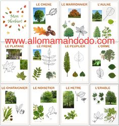 tree identification ~ tree identification - tree identification chart - tree id - tree ideas outdoor - tree ideas - tree ideas for front yard - tree identification chart for kids - tree identification chart bark