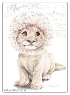Dandylion...by Rob Foote