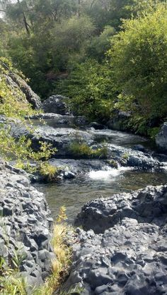 Upper Bidwell Park - Chico, CA  Pinned by www.CaliforniasHarvest.com