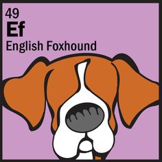English Foxhound, Dog Table, Dog Poster, The Fox And The Hound, Poster Making, Pugs, Dog Breeds, Dog Lovers, Posters