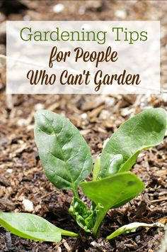 If you feel like the world's worst gardener, you need these gardening tips for people who can't garden. You might just find you can get a harvest after all!