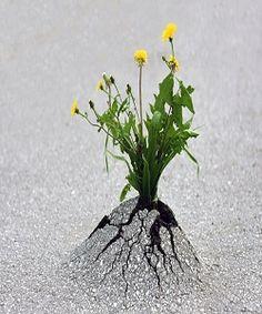 Superbes clichés sur la survie  en milieux hostiles, il y a toujours de l'espoir ...