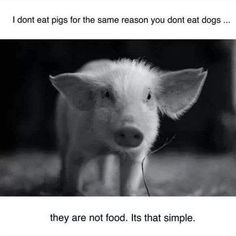 I don't eat pigs for the same reason you don't eat dogs. They are not food. It's that simple. {Go Vegan} Vegan Facts, Vegan Memes, Vegan Quotes, Vegetarian Quotes, Vegan Humor, Mon Combat, Why Vegan, Vegan Animals, Stop Animal Cruelty