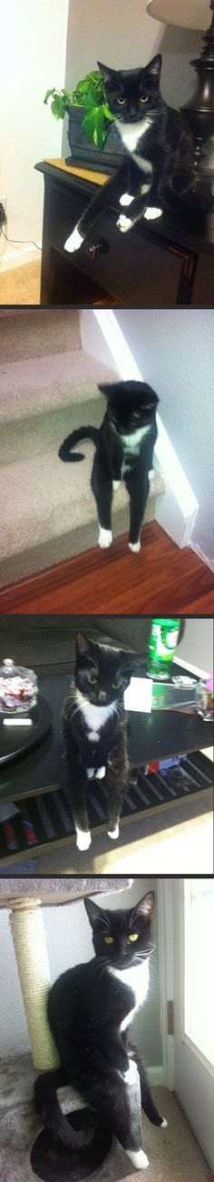 The cat who sits like a dude...
