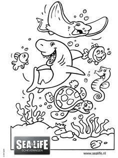 Imagini pentru onderwaterwereld kleurplaat.