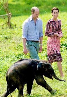 The Duke and Duchess of Cambridge visit the Centre for Wildlife Rehabilitation and Conservation, at Kaziranga National Park on April 13, 2016 in Guwahati, India. Prince William And Catherine, William Kate, Lady Diana, Duke And Duchess, Duchess Of Cambridge, Elephant India, Baby Elephant, Princesa Kate Middleton, Prinz Harry