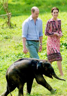 The Duke and Duchess of Cambridge visit the Centre for Wildlife Rehabilitation and Conservation, at Kaziranga National Park on April 13, 2016 in Guwahati, India.
