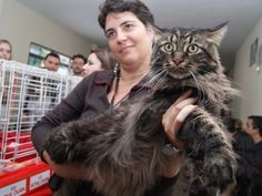 gato-gigante-g