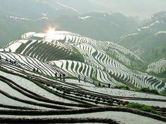 Longsheng Rice Terrace in spring, Guilin - http://www.guilinholiday.com/attraction-v1021-longji-terraced-fields