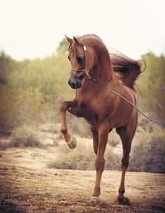 beatiful baby horse | ... from 3-5 p.m. to kick off the upcoming Scottsdale Arabian Horse Show
