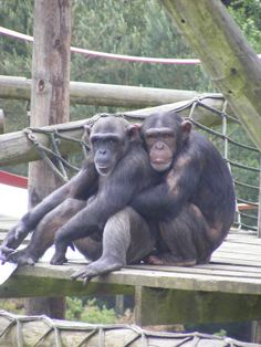 Monkey World <3 loved visiting here as a teenager on a holiday to Corfe with Kim and nannie and grandad. Spent the next year dreaming of working there! Was great to take Archie back last year and see the babies all grown up!