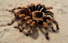 Photoshop Design by SamyPhotoshop #photoshop #montage #australianoutback #spider #weird #bizzare #designcrowd