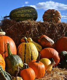Paproski's Castle Hill Farm | Pumpkin Patch