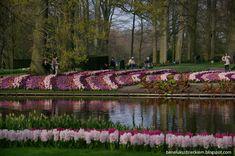 Keukenhof, czyli kwintesencja Holandii   Cały ten Beneluks... River, Outdoor, Outdoors, Outdoor Games, The Great Outdoors, Rivers