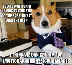 Lo que tiene uno que hacer para llevarlos al veterinario XD
