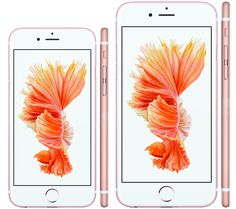 iPhone 6S (left), iPhone 6S Plus (right) in their new rose gold finish.
