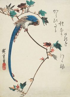 Blue magpie on maple branch.  Ink and color on paper.  1820-1858, Japan, by artist Utagawa Hiroshige.  Gift of Eugene and Agnes E. Meyer.  Freer Gallery of Art and Arthur M. Sackler Gallery