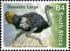 Definitive values - Ostrich) Camelus, Commemorative Stamps, Ostriches, Postage Stamp Art, Beaches In The World, African Animals, Mail Art, Stamp Collecting, Union Of South Africa