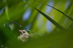 """Jardineando""  Autor: Elmer Ayala   #TOURSFOTOGRAFICO #Viaje #Naturaleza #Fotografía #Perú #Caminos #Rutas #Paisajes #Postal #Viajeros #Mochileros #Tours #Flora #Fauna #Ruinas #trekking #Trip #visitperu #arribaperu #discoverperu #primavera #puno #lago"