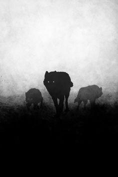 ⋆ Una tormenta de nieve estalló dentro de los ojos de un lobo y las lágrimas congeladas cubrieron todas las laderas de las montañas, pero el tiempo pasó y el lobo murió y algún día ese lobo seré YO⋆