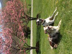 Marley & Bella
