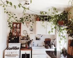 A kitchen is always better with plants