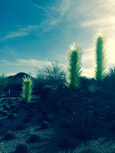 Chihuly at the Desert Botanical Gardens. Desert Botanical Garden, Botanical Gardens, Artsy Fartsy, Deserts, Plants, Postres, Plant, Dessert, Planets
