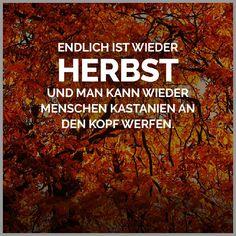 Die 47 Besten Bilder Von Herbst Spruche Fall Sayings Good Morning