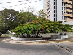 Praça Tauapiranga,  Cidade Alta Delonix Regia, Sidewalk, City, Side Walkway, Walkway, Walkways, Pavement