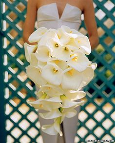 Gorgeous calla lillies