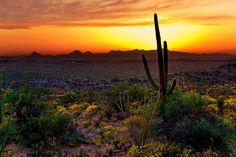 Saguaro and the Setting Sun via MuralsYourWay.com