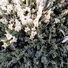 """106 """"Μου αρέσει!"""", 2 σχόλια - Evanthia Kaba (@evanthia_kaba) στο Instagram: """"#naturephotography #nature_pics #nature #naturelovers #wildflowers #instagood"""" Nature, Plants, Instagram, Naturaleza, Plant, Nature Illustration, Off Grid, Planets, Natural"""
