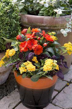 Scarlet Impatiens, Yellow Lantana And Purple Coleus. Impatiens Flowers,  Flowers Garden, Planting