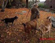 Tasha Tudor walking with nubian goats