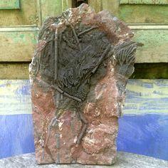 Plaque Crinoïde Fossile - Scyphocrinus elegans - 30 cm