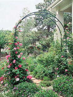 Climbing Plants Incorporate Metal Arbors in the Garden