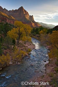 Zion National Park - Utah is one of the places we need to visit, next time we go to the US. There are so many amazing places in Utah that we need to see! Places To Travel, Places To See, Wonderful Places, Beautiful Places, Amazing Places, Parque Natural, Les Continents, Seen, Landscape Photos